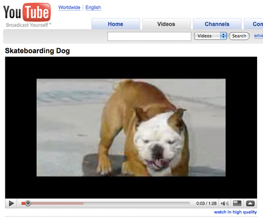 youtube-dog