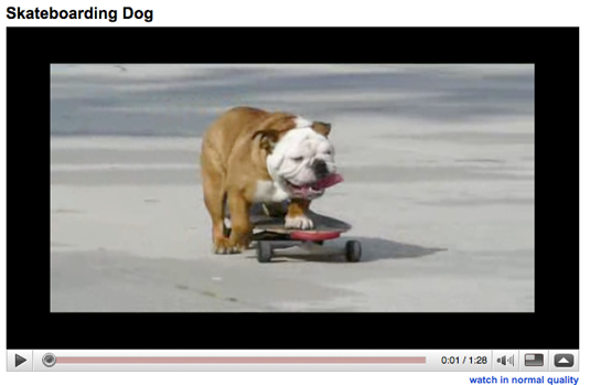 youtube-dog21